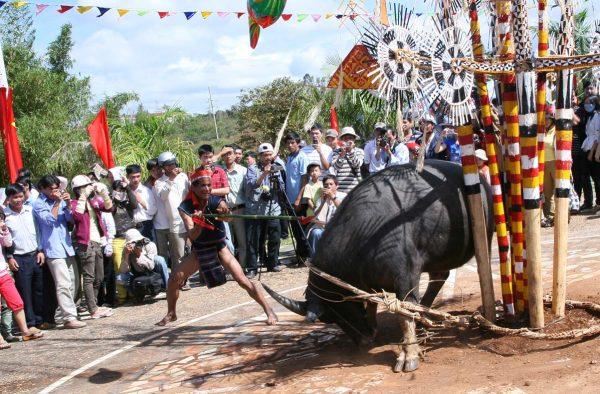 lễ hội đâm trâu tây nguyên