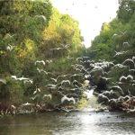 vườn quốc gia tràm chim miền Tây Nam Bộ