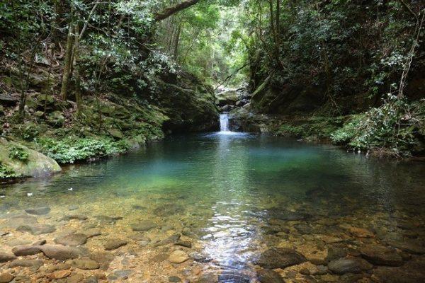 Vọng Hải Đài rừng quốc gia bạch mã