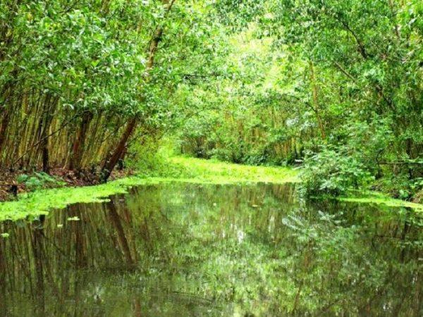 Khu bảo tồn thiên nhiên Lung Ngọc Hoàng- Hậu Giang