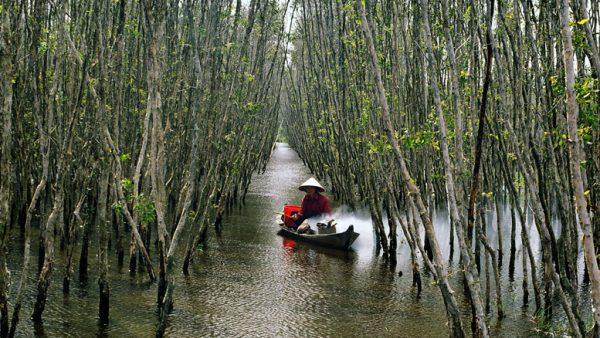Rừng tràm U Minh