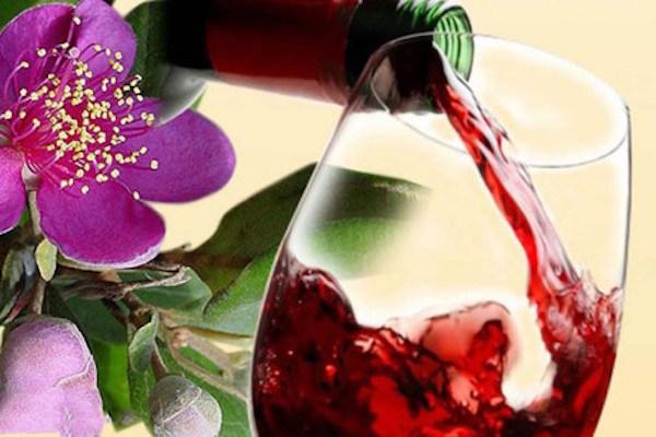 Rượusim rừng Phú Quốc
