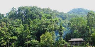 Rừng nguyên sinh Khe Rỗ-điểm du lịch Bắc Giang