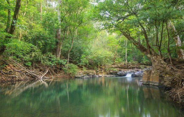 Vườn quốc gia Bù Gia Mập điểm du lịch bình phước