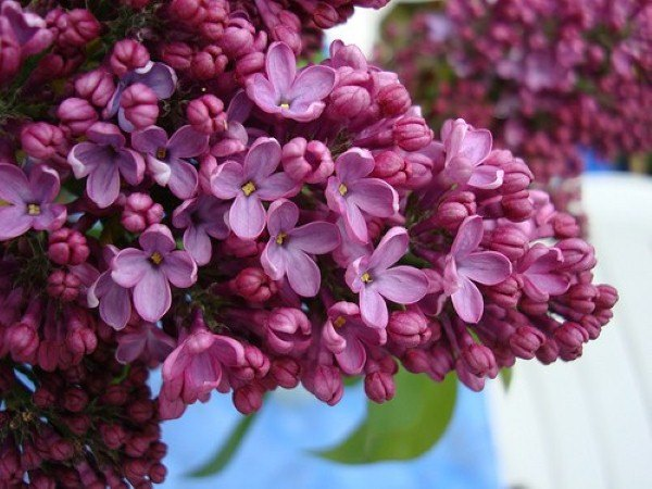 Mơ thấy hoa là điềm báo lành hay dữ?