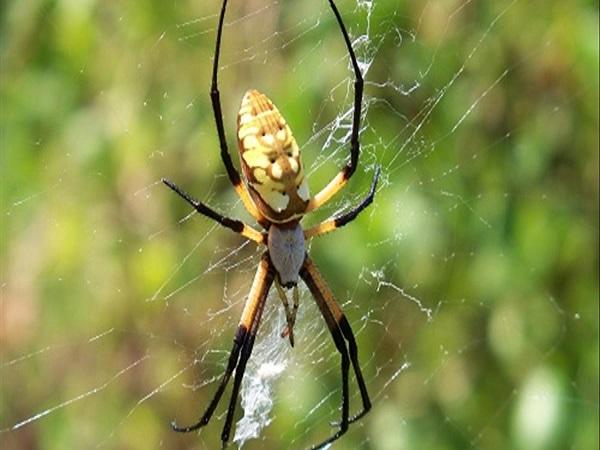 Mơ thấy nhện có điềm báo gì? đánh con số nào?